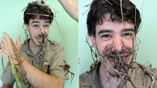 Can You Believe the Sticks on This Guy's Face Are Actually Bugs?