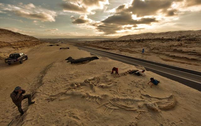 How a Mass Whale Graveyard Ended Up Beneath a South American Highway