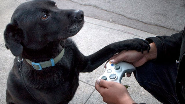 Turn an Old Xbox Controller into a Dog Leash and Poop Bag Dispenser