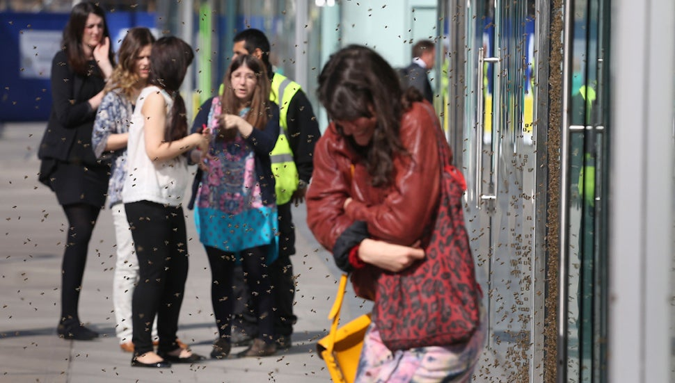 Swarm of Five Thousand Bees Mobs Central London Topshop