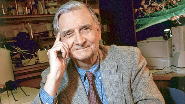 Ecologist E. O. Wilson explains why you likely have an acute case of biophilia