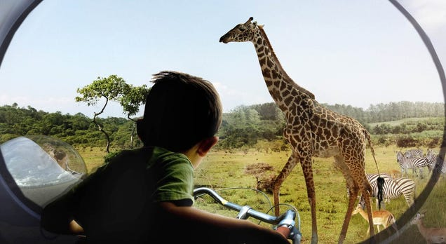 A Redesigned Zoo Where Humans Stay Hidden Could Be Better For Animals