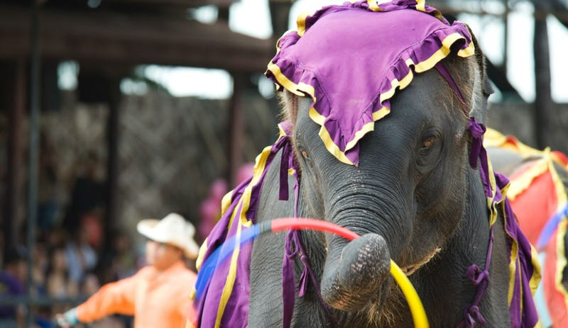Los Angeles Bans Bullhooks and Other Devices Used to Control Elephants