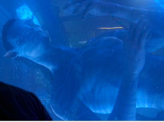 Would You Have Sex With James Cameron's Blue Aliens?