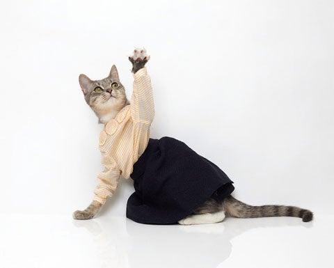 I Can Haz Deeziner Clothings?