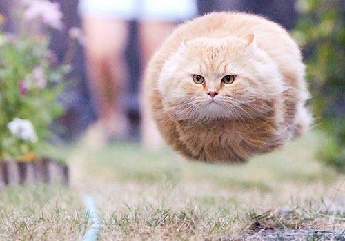 Happy Hump Jump Day!