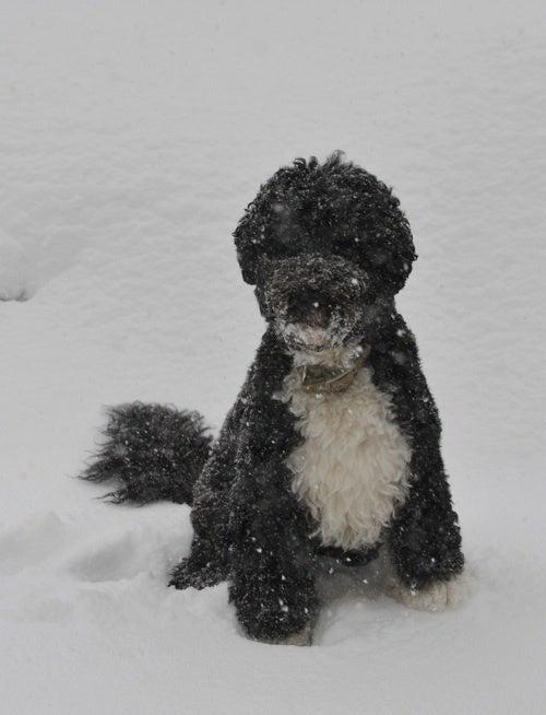 Snow For Bo