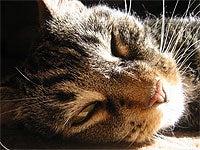 Decrease your cat allergies