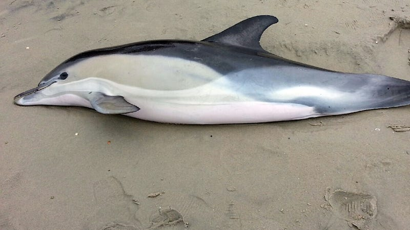 How's Your Summer of Mass Dolphin Deaths Been So Far?