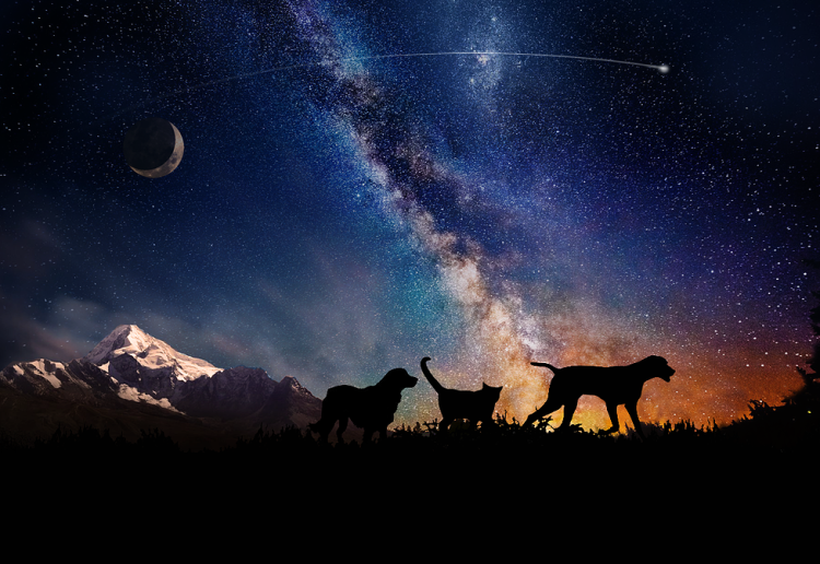 You Can Now Launch Your Dead Pets Into Space