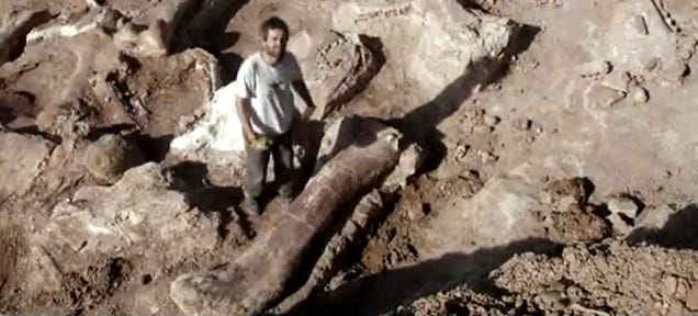 These Bones Might Be the Biggest Creature That Ever Walked the Earth