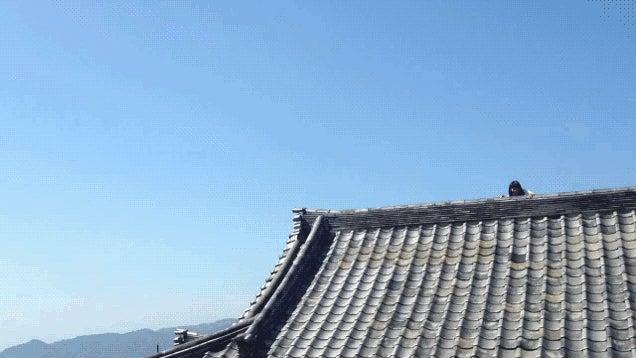 Japanese Schoolgirl Ninja Jumping Off Buildings