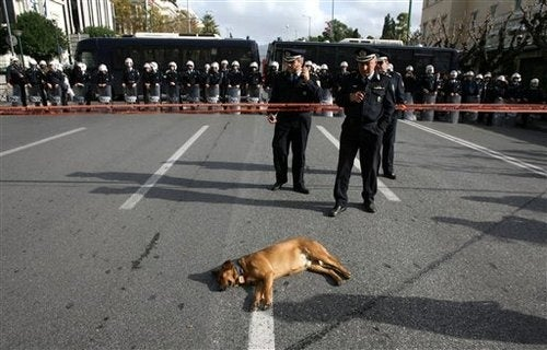 Meet the Stray Dog That Attends Every Protest in Athens