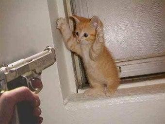 Cyber Monday GameStop Robbery