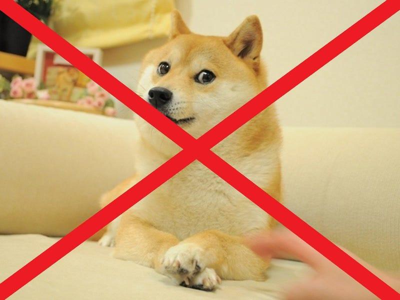 I HATE DOGE: A POEM
