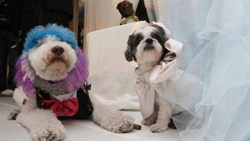 Call It Puppy Love: Two Dogs Marry In Most Expensive Pet Wedding Ever