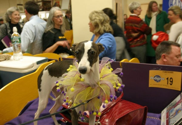 Deep, DEEP Inside The Westminster Dog Show