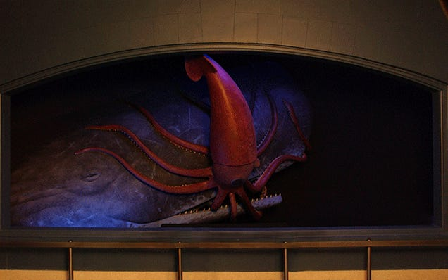 Epic Encounter: Giant Squid and Sperm Whale