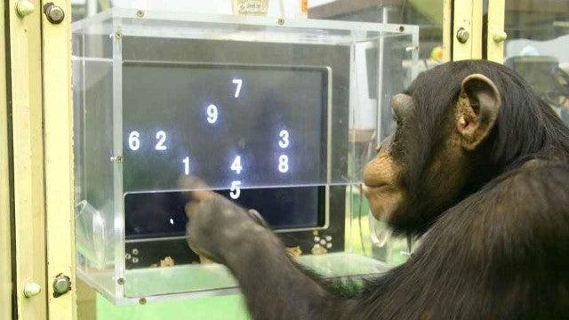 How do you give an animal an IQ test?