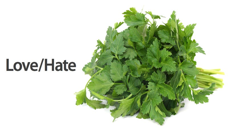 Is Cilantro Hating Genetic?