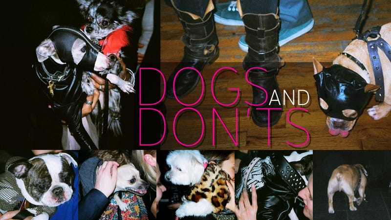 Sometimes When Vice Throws a Party You Will See Dogs Sashaying in Assless Leather Chaps