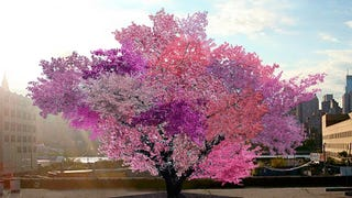 This amazing magical tree produces 40 different types of fruit