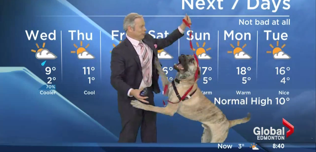 Spry Dog Doesn't Give a Fuck About the Weather Forecast