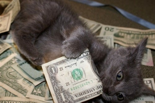Goldman Sachs Hates Pays Promptly for the Medical Costs of Adorable Kittens