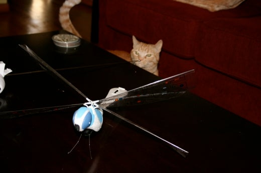 My Cat Vs. The Dragonfly, The Battle to End All Battles