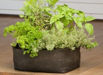 Grow Bags Create a Low-Maintenance Garden Anywhere