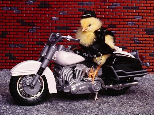 Why Media Writers Shouldn't Write About Biker Chicks