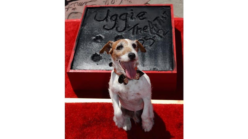 Thank Dog: Uggie Finally Gets the Hollywood Respect He's Always Deserved