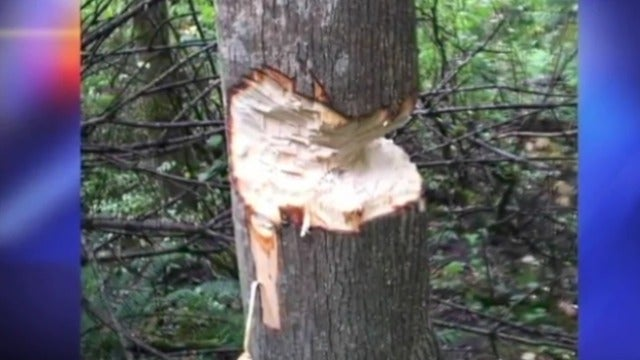 Chopping Down Trees Is 'Better Than Drinking,' Say Teens
