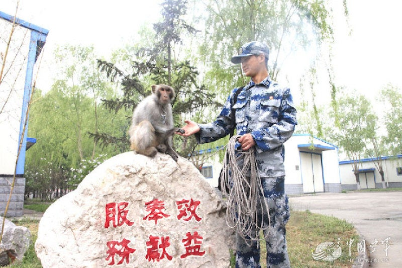 China Commands an Army of Trained Monkeys