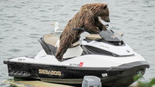 Check Out Jet Ski Bear, The Bear That's On A Fucking Jet Ski