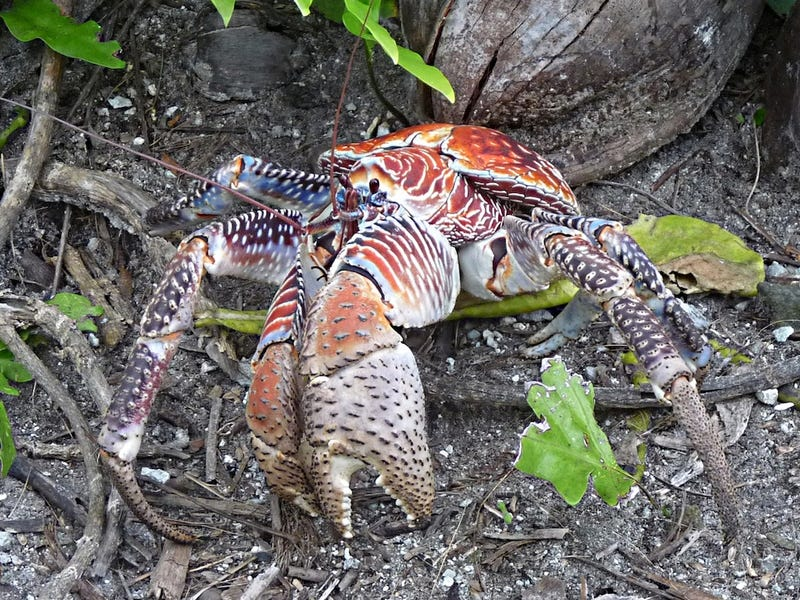 Weekend Nightmare Fuel: The Biggest Crawling Animals on Earth