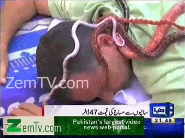 Snake Massages Look Utterly Horrifying