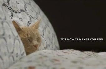 Video: IKEA Lets 100 Cats Roam Through Store