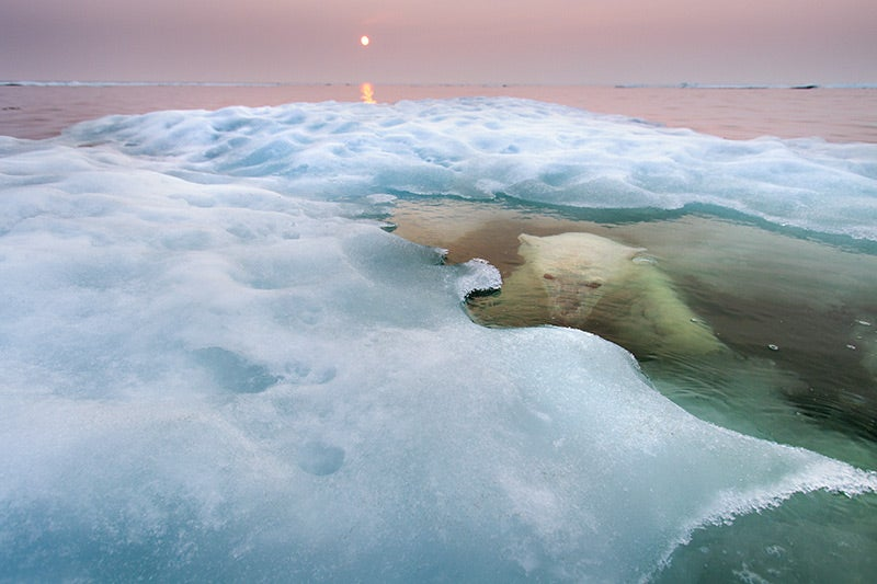 Behold the mysterious polar bear of the lake
