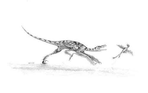 Velociraptor's Cousin Had a Venomous Bite