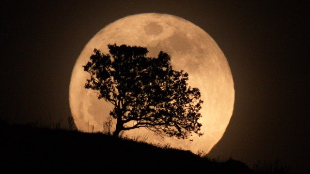 "What happened to all those ""Moon trees"" whose seeds went into space?"