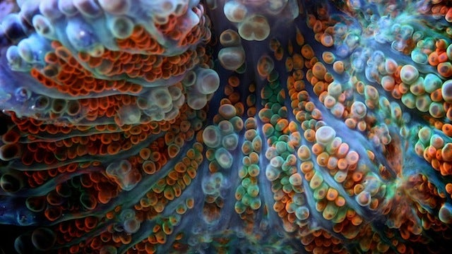 Macro photos of coral take us to underwater alien worlds