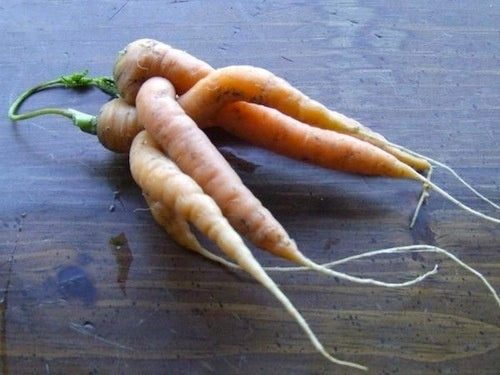 And This Is How Carrots Make Baby Carrots