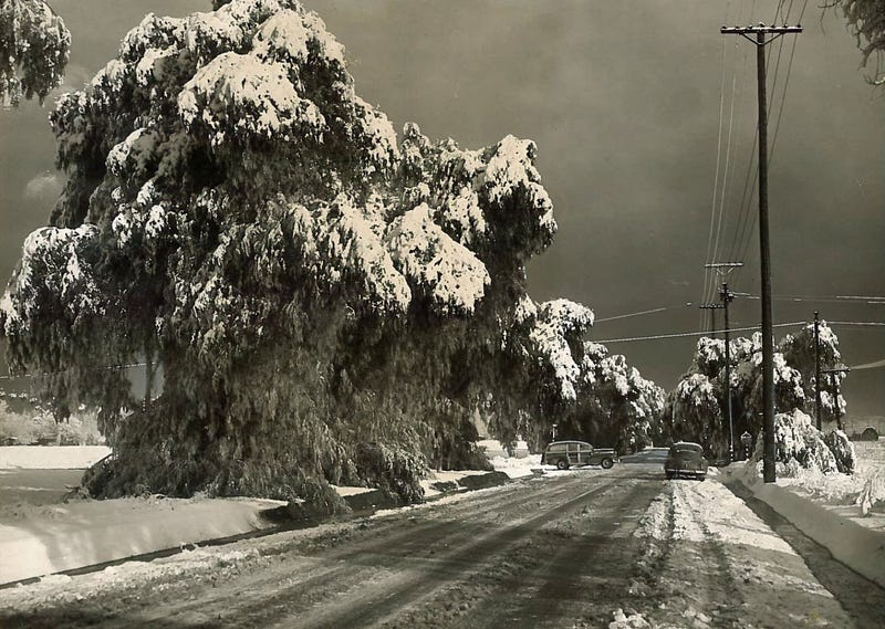L.A. Weather Isn't Always Perfect: Snow & Hurricanes in the Southland