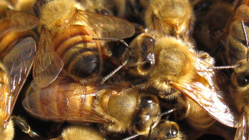 Bees To Humans: We'll Make Hives Out Of Your Plastic Trash