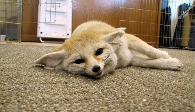 Never enough cute animals.