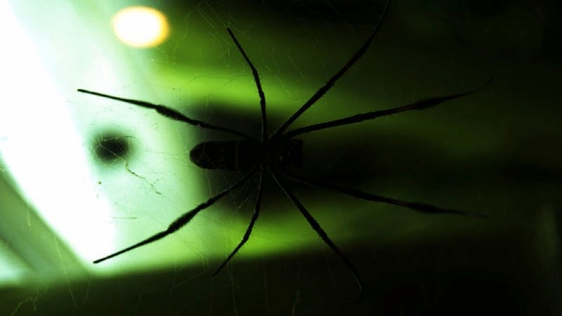 How I learned to stop worrying and love the radioactive spiderwebs