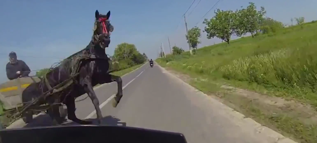 Oh my, motorcyclist just misses crashing into a horse on the road