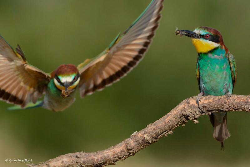 Estas son las mejores fotografías de naturaleza de 2015