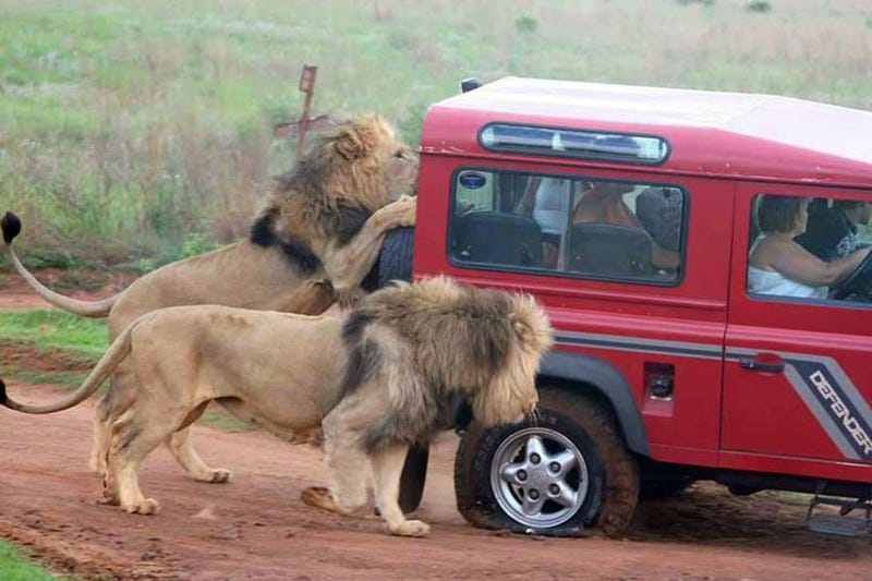 Land Rover Defender: Protects You From Lions If You Get A Flat
